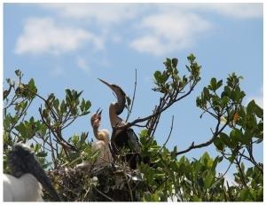 bird-island-younger-residents.jpg